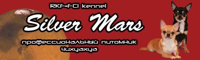 чихуахуа Silver Mars